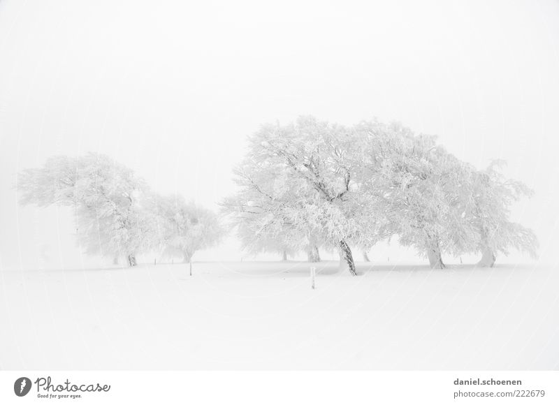 Nature White Tree Winter Snow Environment Landscape Bright Weather Ice Wind Fog Climate Frost Monochrome Black Forest