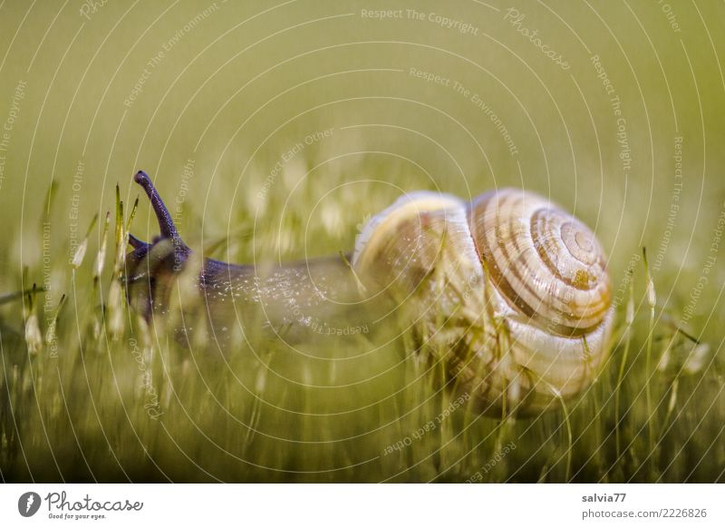 jungle testing Environment Nature Earth Plant Moss Meadow Animal Snail Brown-lipped snail 1 Soft Green Speed Perspective Lanes & trails Time Target Crawl Feeler
