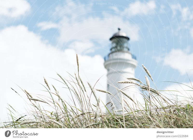 The grass is over the matter Vacation & Travel Tourism Trip Sightseeing Sky Clouds Summer Climate Beautiful weather Plant Grass Marram grass North Sea
