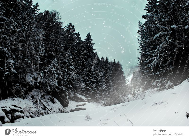 Nature Tree Plant Winter Calm Loneliness Forest Snow Mountain Snowfall Environment Weather Fog Climate Switzerland Hill