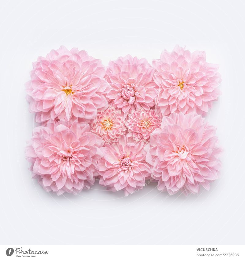 Nature Plant White Flower Background picture Style Feasts & Celebrations Pink Design Decoration Birthday Sign Wedding Bouquet Conceptual design Horizontal