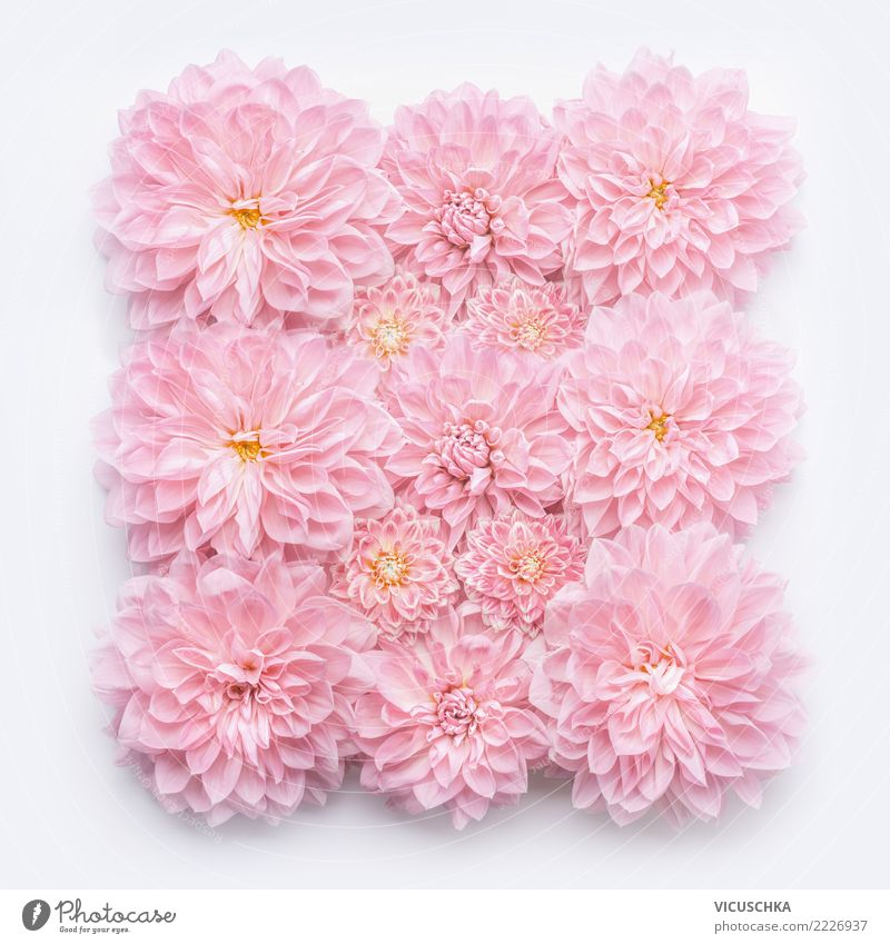 Nature Plant Flower Blossom Love Background picture Style Feasts & Celebrations Pink Design Decoration Birthday Sign Wedding Rose Bouquet