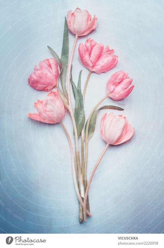 Tulip bundles in pastel colour on blue Style Design Feasts & Celebrations Valentine's Day Mother's Day Wedding Birthday Plant Spring Flower Blossom Decoration
