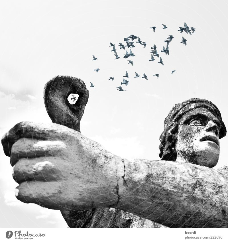 captured Animal Manmade structures Architecture Tourist Attraction Monument Statue Bird Pigeon Flock Flying Stand Old Famousness Moody Movement Freedom