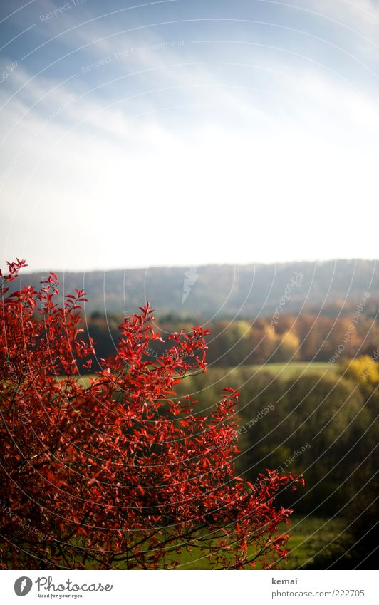 Sky Nature Green Tree Plant Red Leaf Clouds Forest Autumn Environment Landscape Growth Bushes Hill Beautiful weather