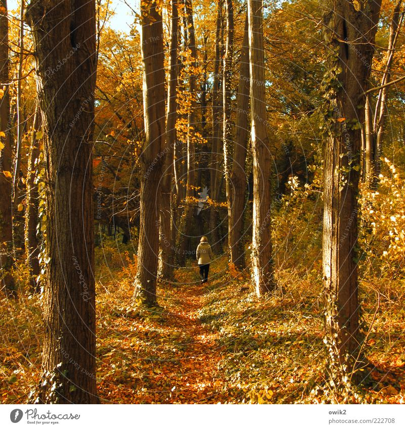 wrong track To go for a walk Promenade Human being Woman Adults 1 Environment Nature Landscape Plant Earth Autumn Climate Weather Beautiful weather Tree Bushes