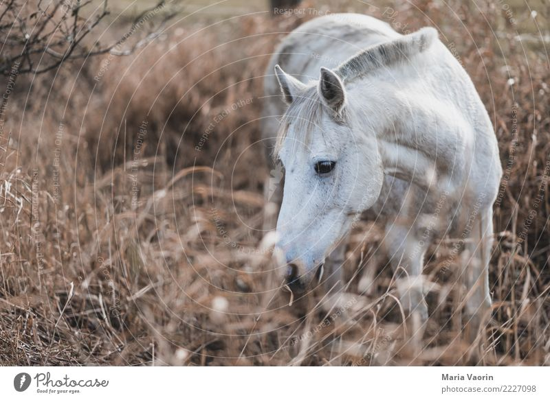horse-table Ride Equestrian sports Nature Autumn Bushes Field Animal Farm animal Horse 1 To feed Natural Brown White Warm-heartedness Love of animals Calm