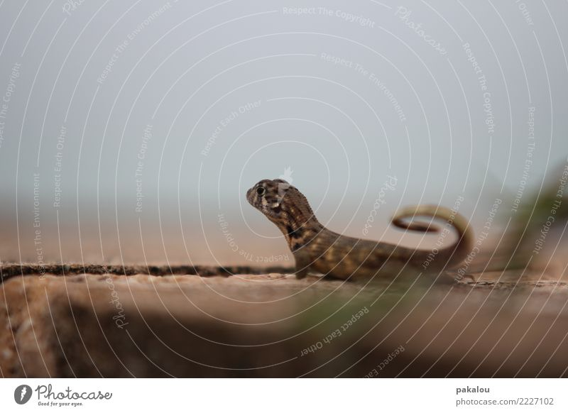 Blue Ocean Animal Background picture Stone Brown Sand Horizon Wait Listening Exotic Hunting Cuba Coil Tropical Reptiles