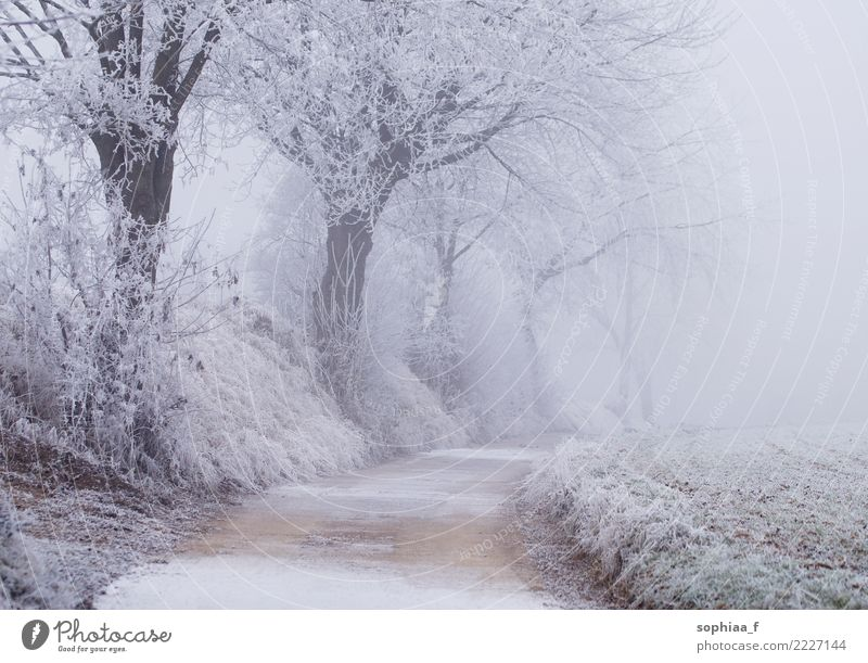 frozen path with trees, foggy winter wonderland idyllic park snow field season weather frosty cold beautiful christmas forest background country environment