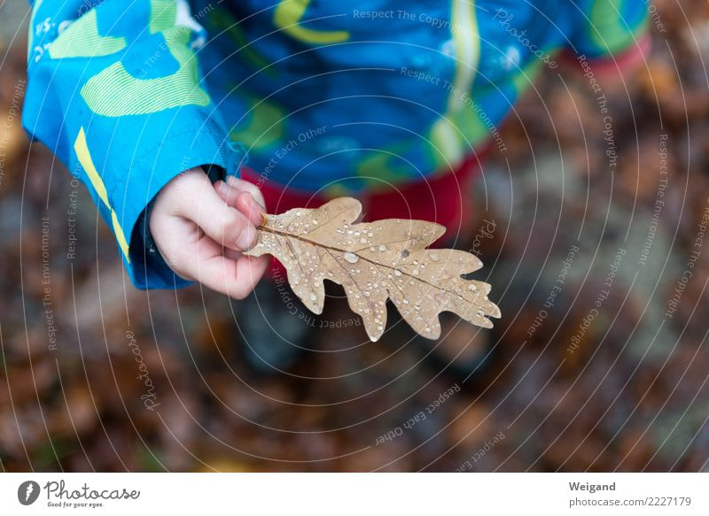 Child Beautiful Leaf Calm Girl Forest Life Autumn Sadness Boy (child) Brown Dream Infancy Fresh Happiness Eternity