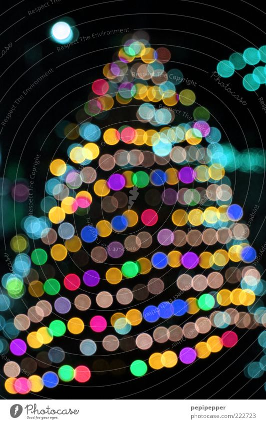 Christmas & Advent Tree Winter Christmas tree Fir tree Feasts & Celebrations Point of light Fairy lights Blur Multicoloured