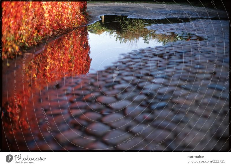 Nature Red Plant Colour Autumn Stone Moody Environment Wet Bushes Traffic infrastructure Seasons Cobblestones Lanes & trails Puddle Paving stone