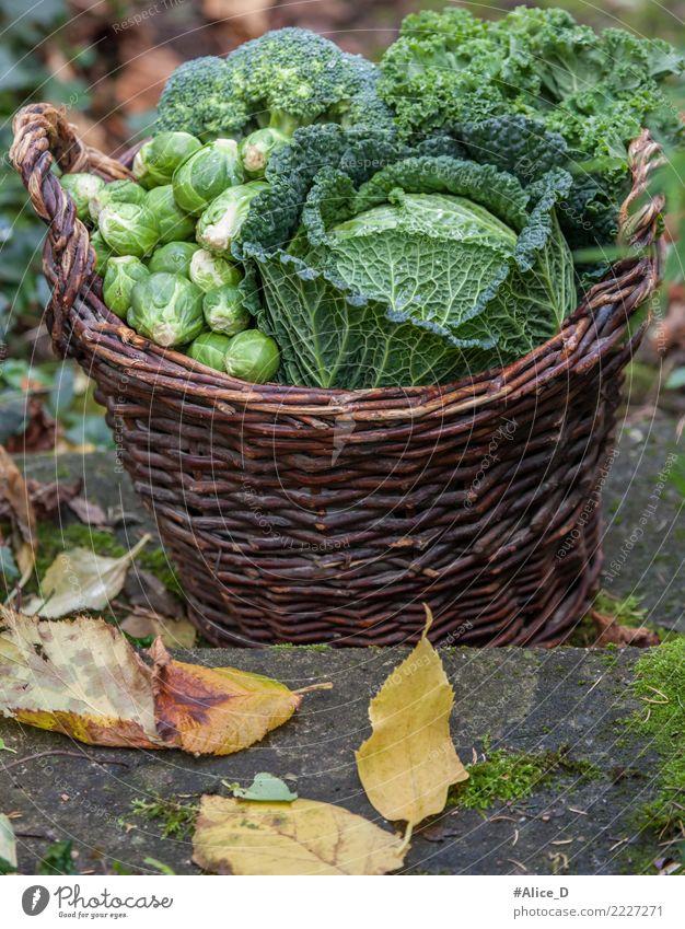 Autumn season regional vegetable basket Food Vegetable Savoy cabbage Brussels sprouts Broccoli Kale Nutrition Organic produce Diet Healthy Winter Garden Fresh