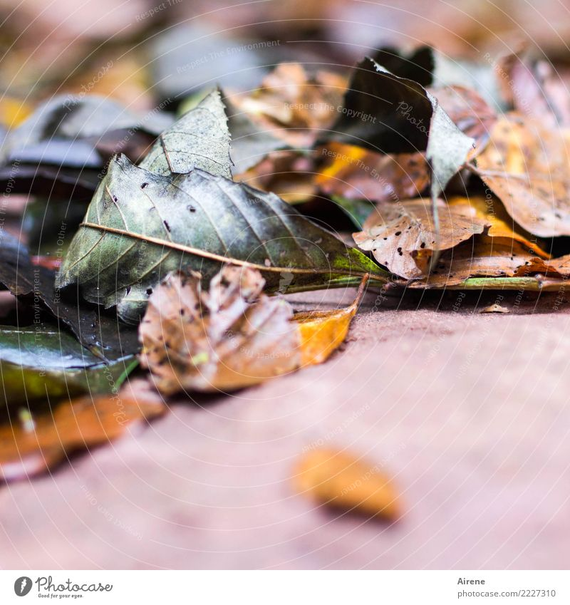 taper off Plant Autumn Leaf Autumn leaves Garden Forest To fall Lie To dry up Old Natural Gloomy Brown Gray Pink Acceptance Compassion Sadness Exhaustion