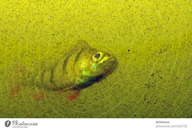 Fishing in the turbid waters! - HAPPY BIRTHDAY PHOTOCASE!!! Animal Aquarium 1 Dreary Water Colour photo Multicoloured Interior shot Day Light Blur