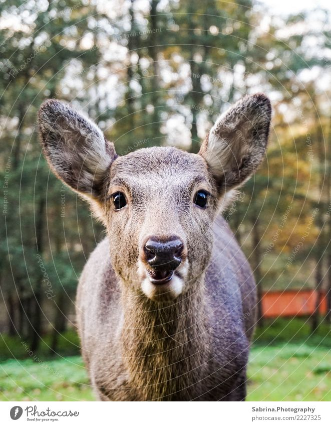 Hello Bambi! Nature Autumn Beautiful weather Tree Forest Deserted Animal Wild animal Animal face Zoo 1 Baby animal Wood Eating Looking Living or residing