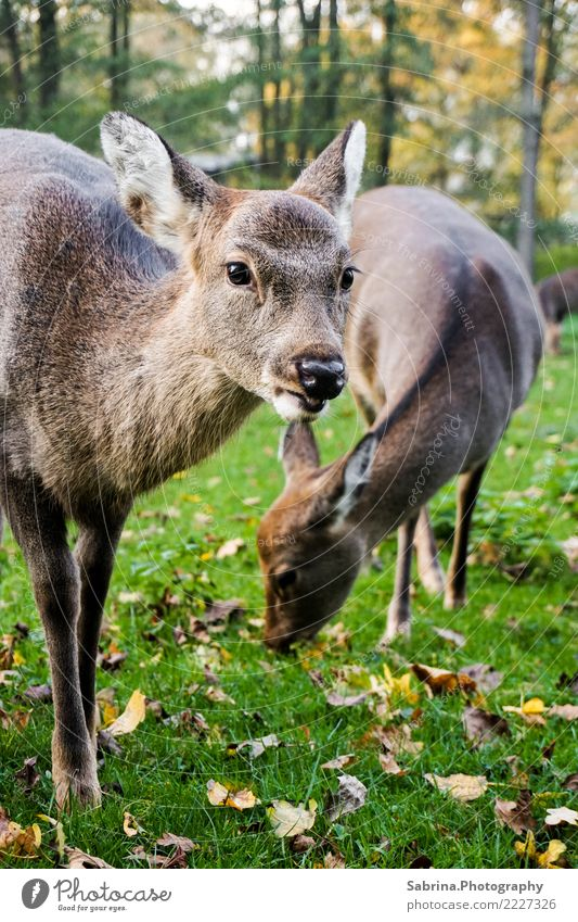 Nature Tree Animal Calm Forest Eating Autumn Wood Family & Relations Germany Wild animal Authentic Happiness Beautiful weather Group of animals Cool (slang)