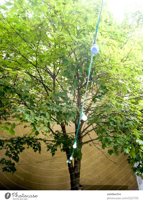Nature Tree Summer Leaf Environment Branch Treetop Twig Partially visible Section of image October Foliage plant Fairy lights