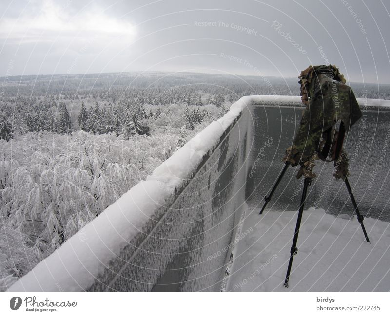 Nature Plant Winter Forest Far-off places Landscape Snow Above Wall (barrier) Horizon Ice Wait Stand Frost Tower Observe