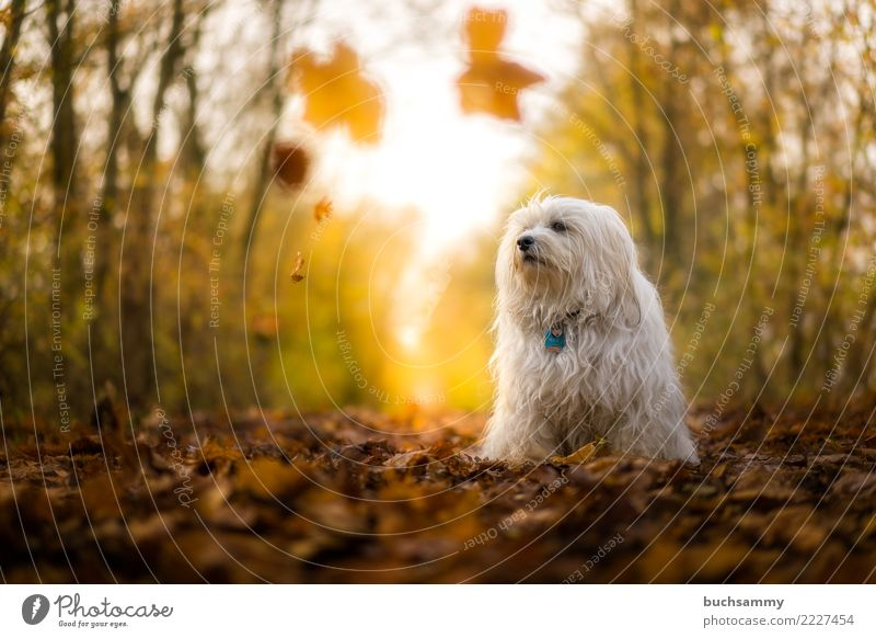 Dog Blue White Animal Leaf Forest Autumn Action Pet Mammal