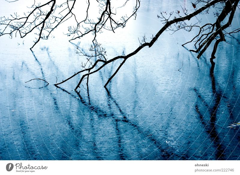 chill Water Winter Ice Frost Tree Branch Pond Creepy Grief Fear Eerie Colour photo Exterior shot Copy Space bottom Reflection Water reflection Surface of water