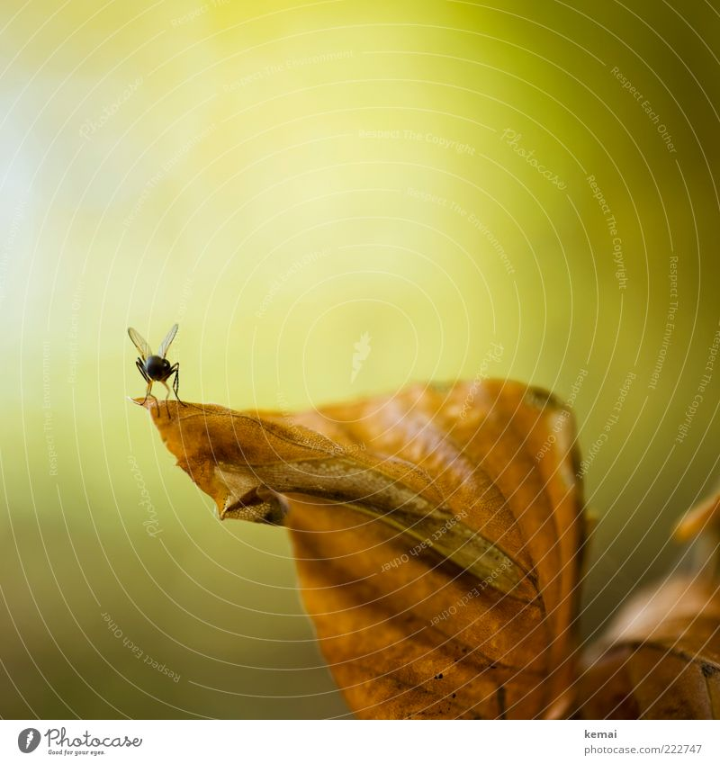 Nature Green Plant Leaf Animal Autumn Environment Brown Fly Sit Insect Wild animal Rachis Autumn leaves To dry up Detail