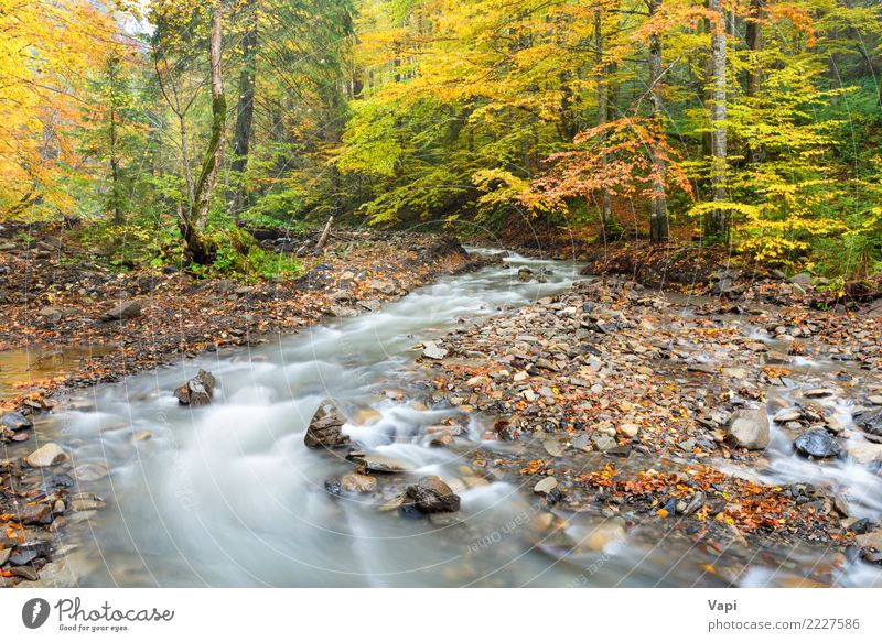 River in autumn forest Nature Vacation & Travel Plant Blue Colour Beautiful Green Water White Landscape Tree Red Leaf Forest Black Yellow