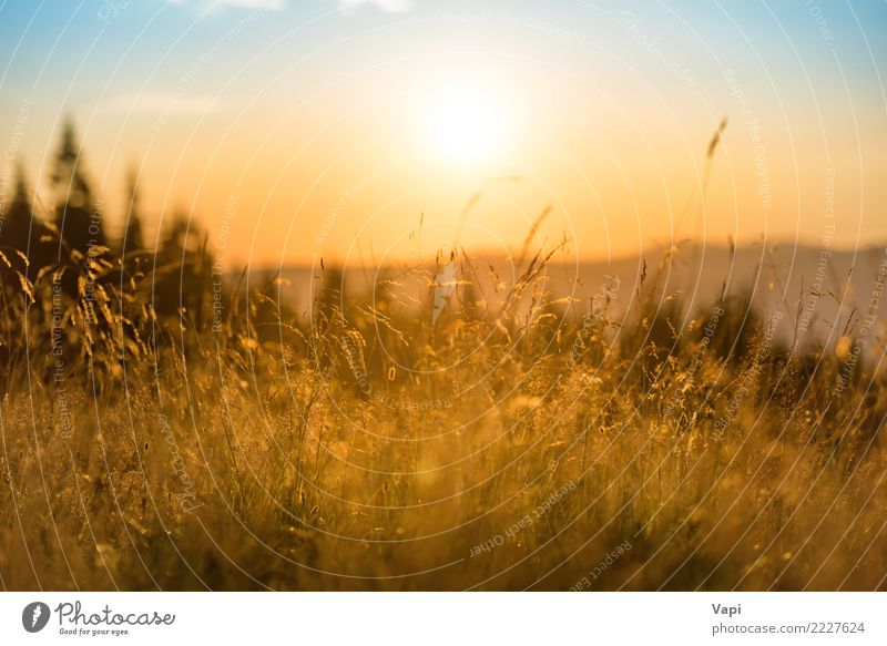 Grass on a field at sunset Beautiful Vacation & Travel Tourism Summer Summer vacation Sun Mountain Environment Nature Landscape Plant Sky Clouds Horizon Sunrise