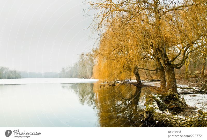Sky Nature Water Tree Plant Winter Calm Loneliness Far-off places Forest Cold Snow Landscape Lake Environment Ice