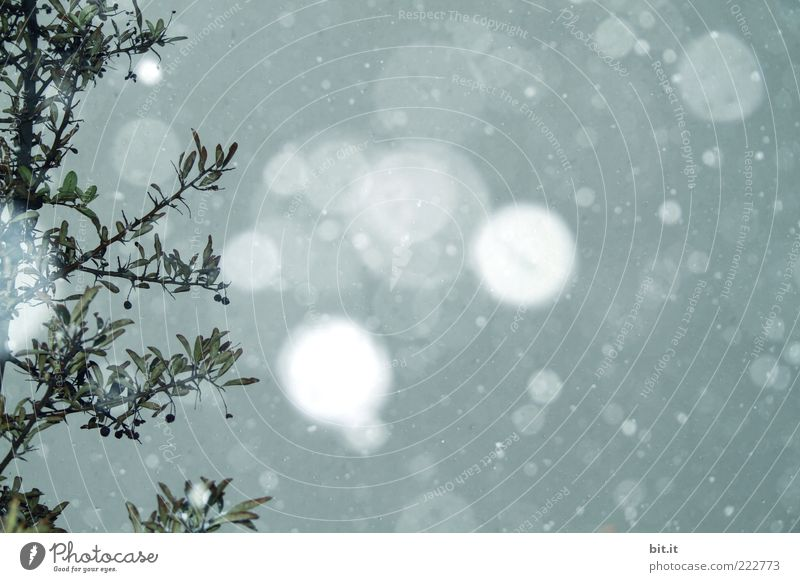 Sky Blue Winter Cold Snow Snowfall Climate To fall Kitsch Branch Illuminate Moon Twig Branchage Snowflake Winter mood