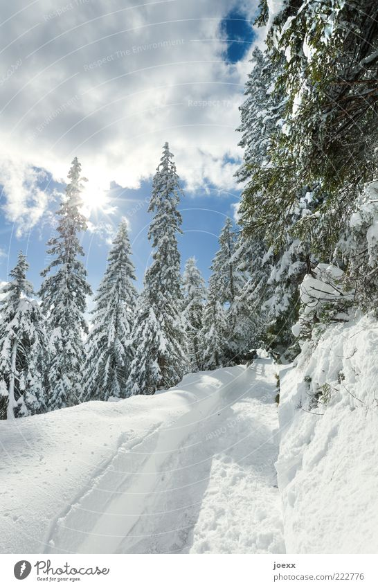 Nature White Tree Green Blue Sun Winter Snow Lanes & trails Landscape Air Weather Footprint Footpath Snowscape Beautiful weather