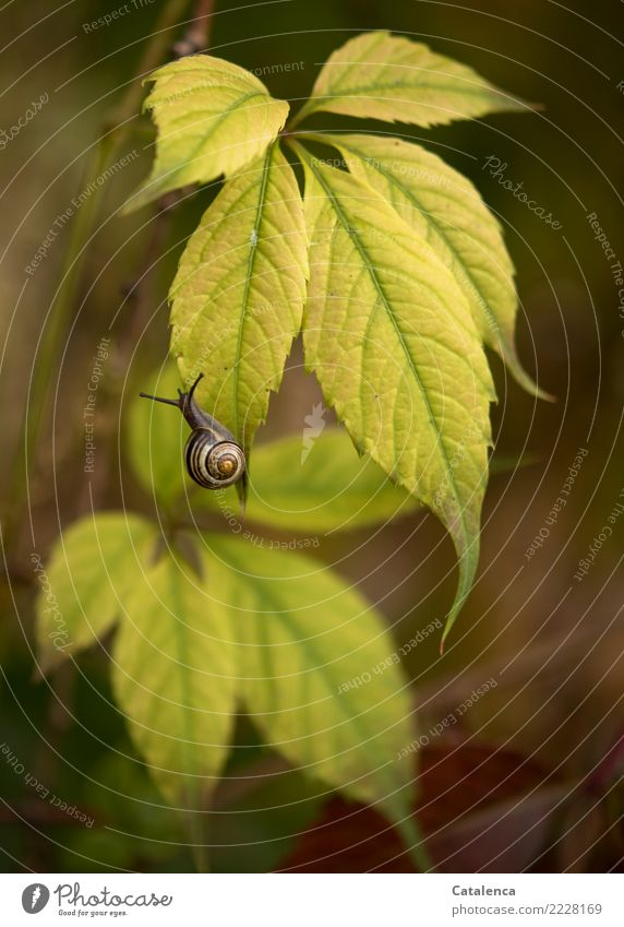 Nature Plant Beautiful Green Animal Leaf Yellow Autumn Movement Garden Brown Moody Earth Change Touch Snail