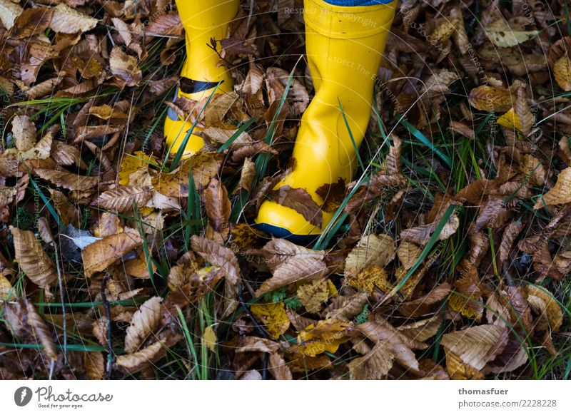 rubber boots, autumn leaves Hiking Human being Feet 1 Nature Autumn Bad weather Rain Grass Leaf Garden Park Meadow Forest Clothing Workwear Footwear Boots