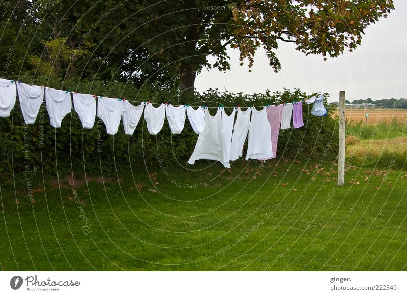 Green White Summer Tree Grass Garden Wind Large Clothing Bushes Clean Laundry Dry Hang Clothesline Underwear