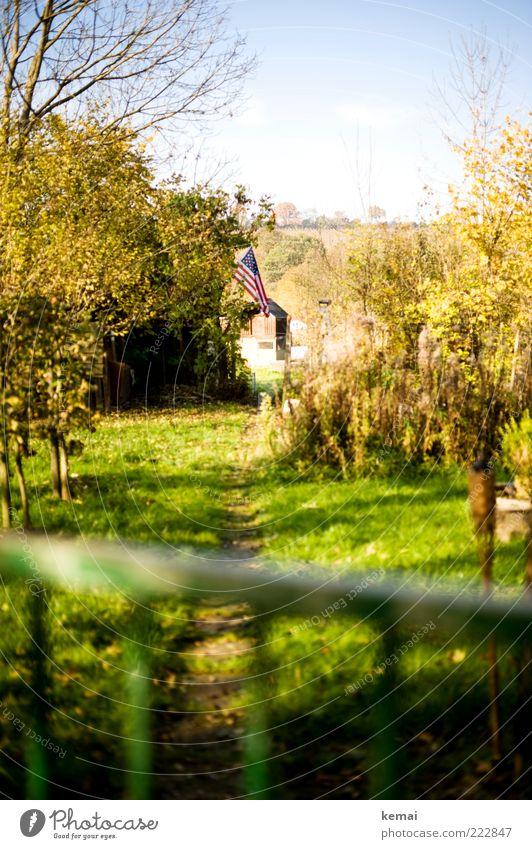 Sky Tree Green Plant Autumn Grass Garden USA Flag Bushes Americas American Flag Beautiful weather Garden plot Garden fence Patriotism