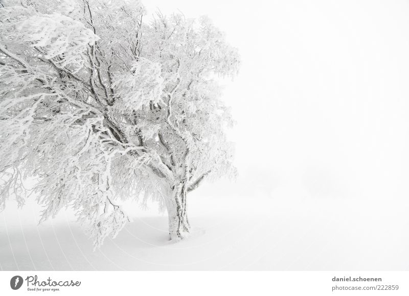 snow-white text space right Vacation & Travel Winter Snow Winter vacation Climate Weather Wind Fog Ice Frost Bright White Black Forest Monochrome Tree