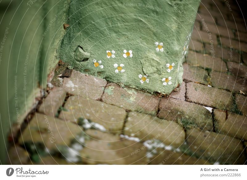 Green Flower Winter Yellow Snow Wall (building) Stone Wall (barrier) Graffiti Art Crazy Happiness Corner Floor covering Uniqueness Idyll