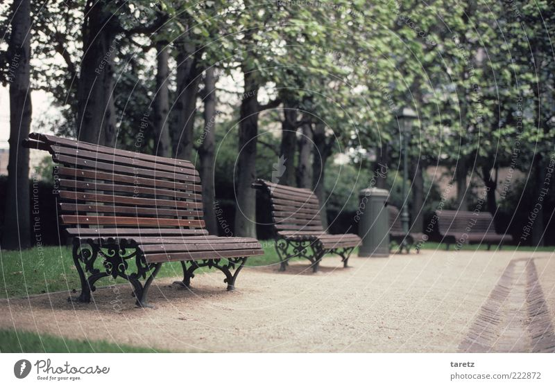 No time for breaks Tree Brussels Old Elegant Cold Loneliness Bench Park bench Classic Ornate Empty Appealing Wooden bench Curved Clean Groomed Colour photo