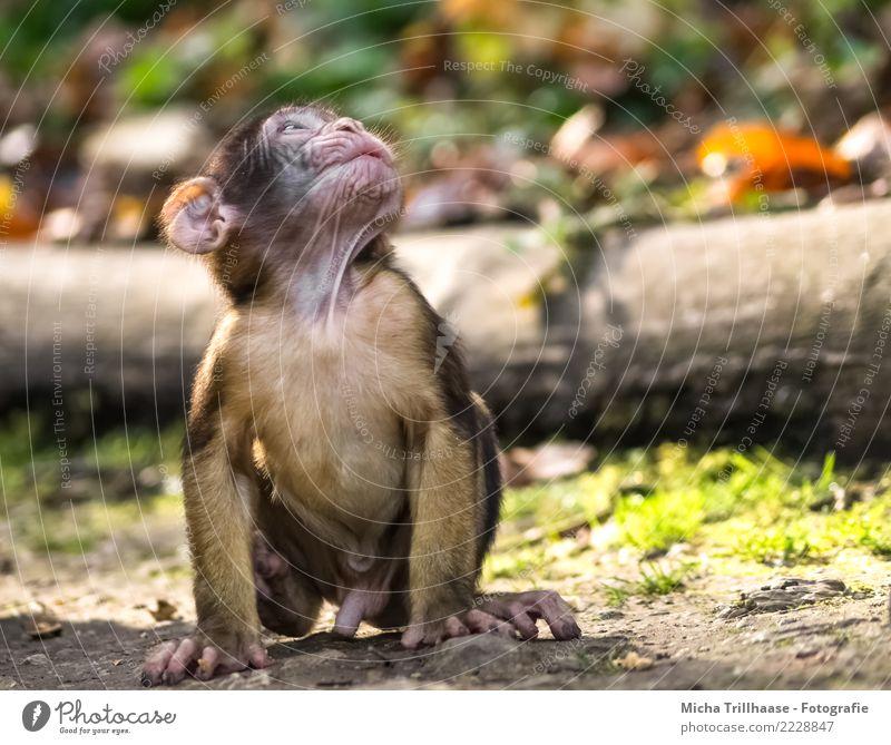 Little World Discoverer Nature Animal Sun Sunlight Beautiful weather Plant Tree Leaf Wild animal Animal face Pelt Paw Monkeys Young monkey Barbary ape 1