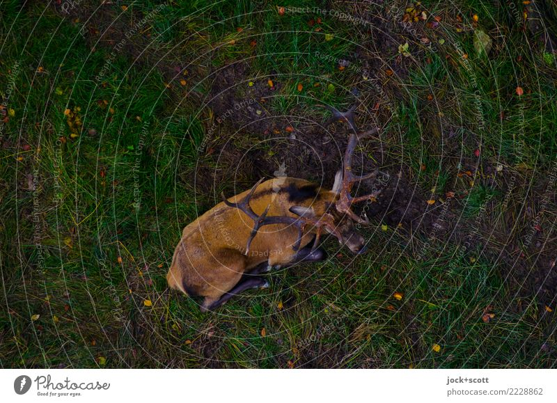 deer on earth Animal Dark Meadow Emotions Natural Moody Lie Wild animal Idyll Authentic Perspective Wait Under Inspiration Safety (feeling of) Antlers