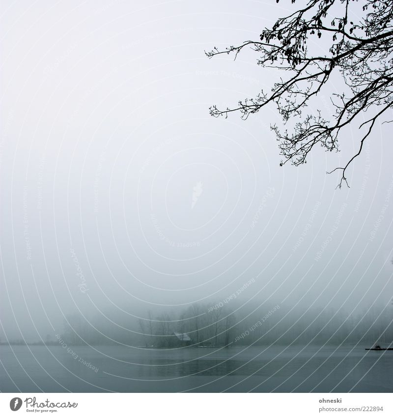 house on the lake Landscape Winter Bad weather Fog Ice Frost Tree Bog Marsh Lake Deserted House (Residential Structure) Hut Dark Cold Gray Grief Loneliness