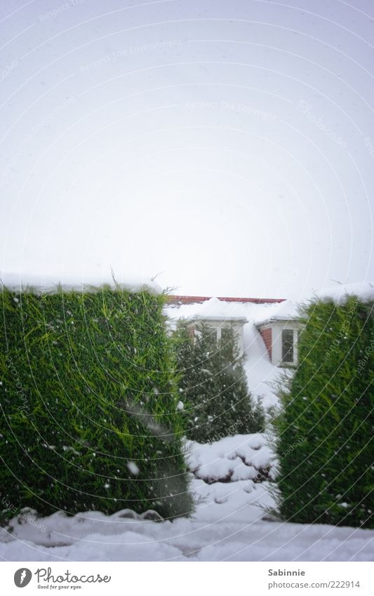 Sky White Green Plant Winter House (Residential Structure) Window Snow Building Ice Frost Roof Apartment Building Gap Vista Hedge