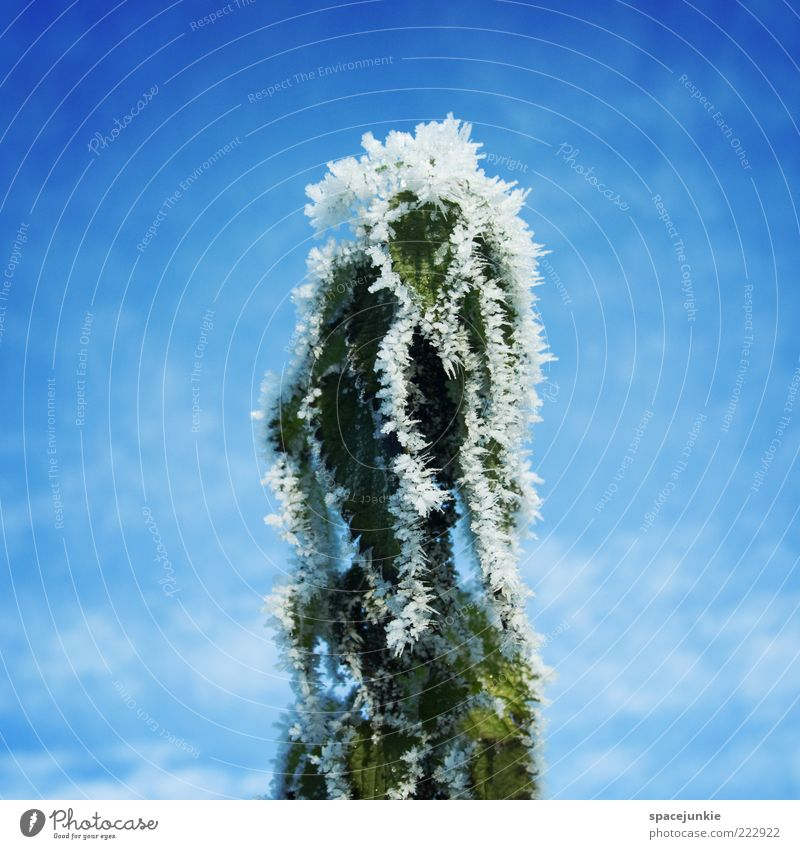 Sky Nature White Green Blue Plant Winter Clouds Cold Emotions Ice Frost Whimsical Blue sky Beautiful weather Ice crystal