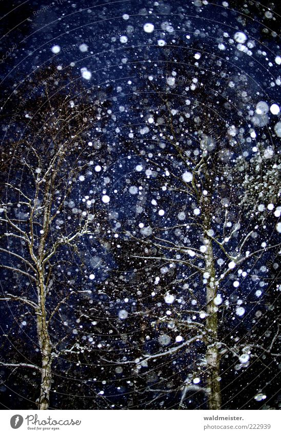 Snow, always just snow... Bad weather Snowfall Tree Forest Esthetic Anticipation Snowflake Winter Colour photo Exterior shot Experimental Abstract Night