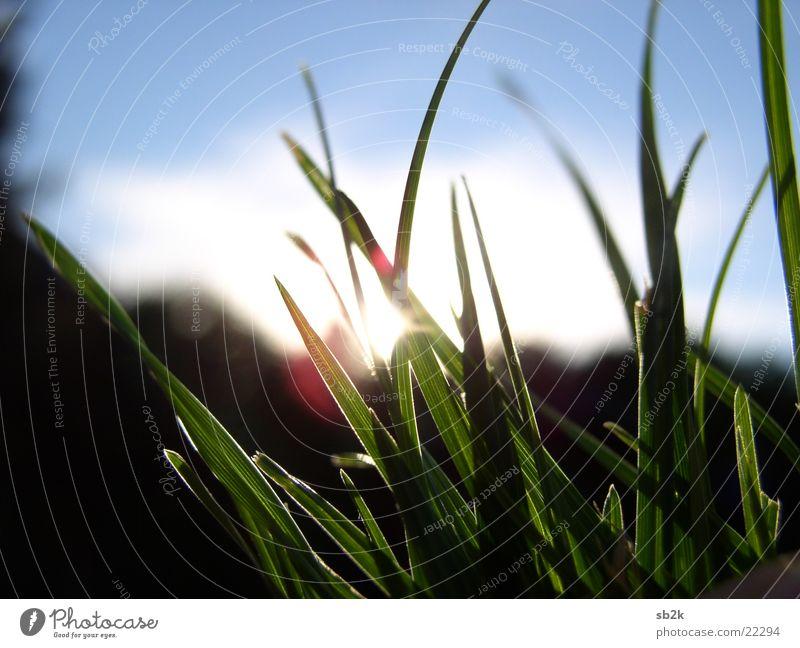 the last moments... Grass Sunset Sunbeam Red Yellow Black Evening Blue