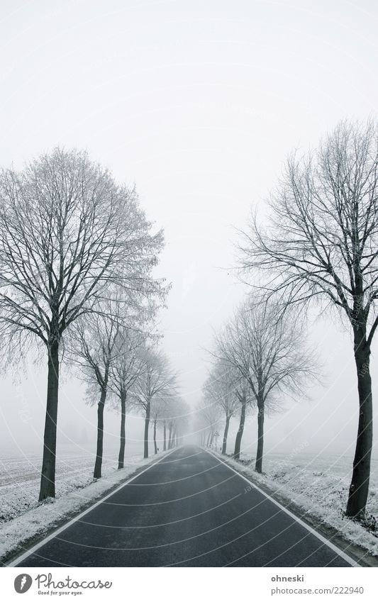 snow avenue Winter Weather Bad weather Ice Frost Snow Tree Street Lanes & trails Avenue Cold White Longing Loneliness Perspective Future Subdued colour