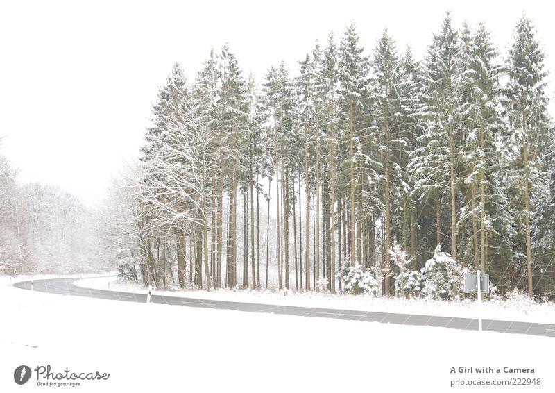 Nature White Beautiful Tree Plant Winter Calm Forest Street Snow Environment Landscape Wait Transport Dangerous Asphalt
