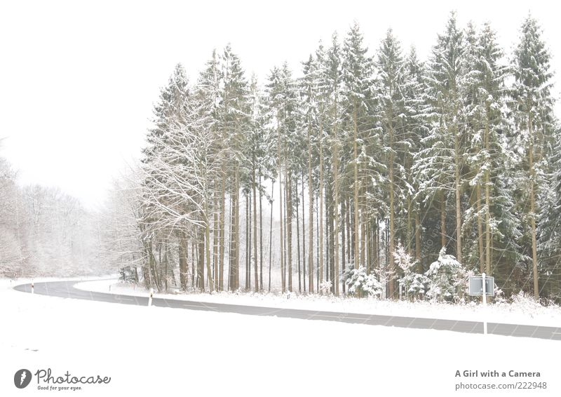 The road to Xmas Environment Nature Landscape Plant Winter Beautiful weather Snow Tree Transport Traffic infrastructure Street Wait Gigantic White Idyll