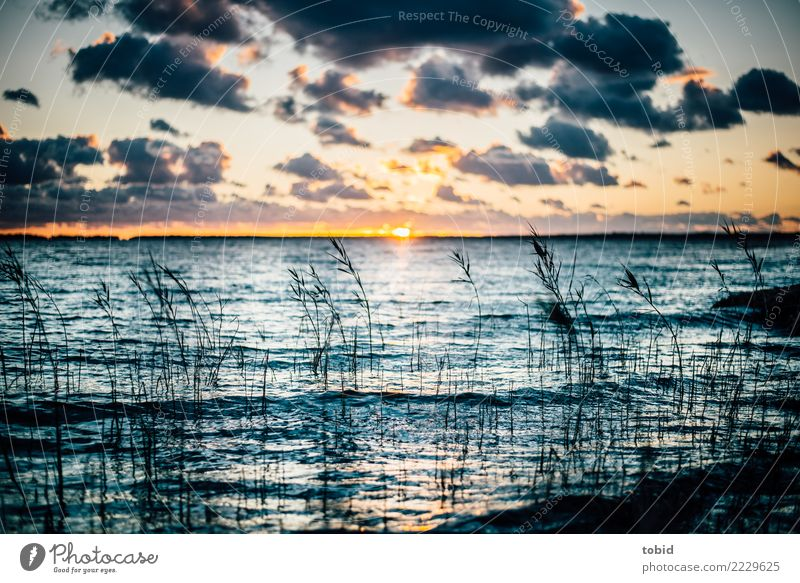 Sunset by the sea Nature Landscape Elements Water Sky Clouds Horizon Beautiful weather Grass Bushes Waves Coast Baltic Sea Ocean Free Infinity Loneliness