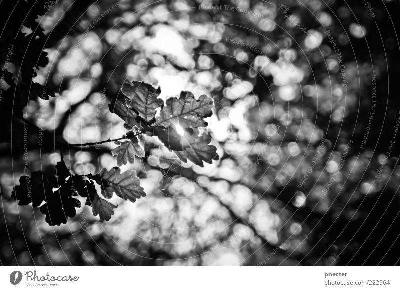 Light :) Environment Nature Landscape Sky Sunlight Summer Autumn Climate Plant Tree Leaf Foliage plant Glittering Illuminate Exceptional Authentic Fantastic